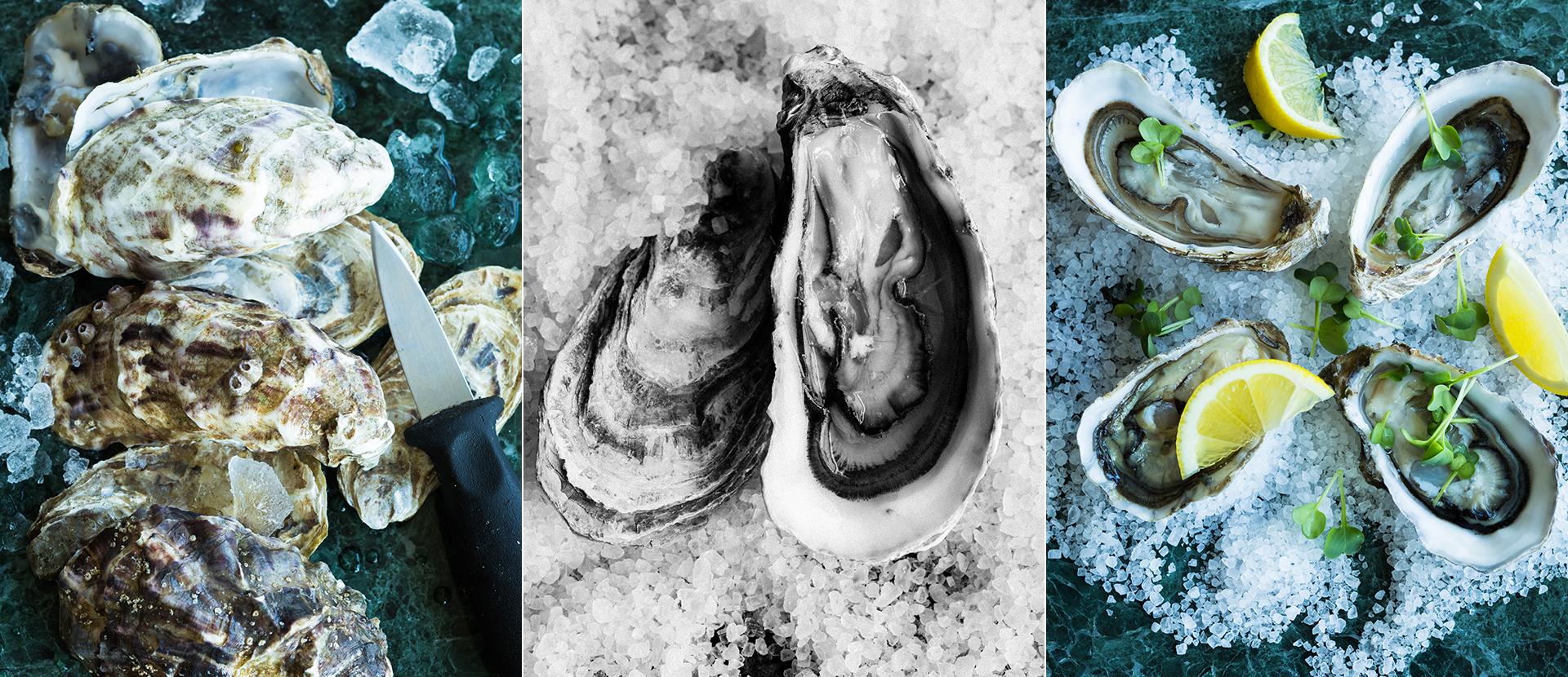 geschlossene und geoeffnete Austern auf groben Meersalz angerichtet. fotografiert von Foodphotography Katrin Winner