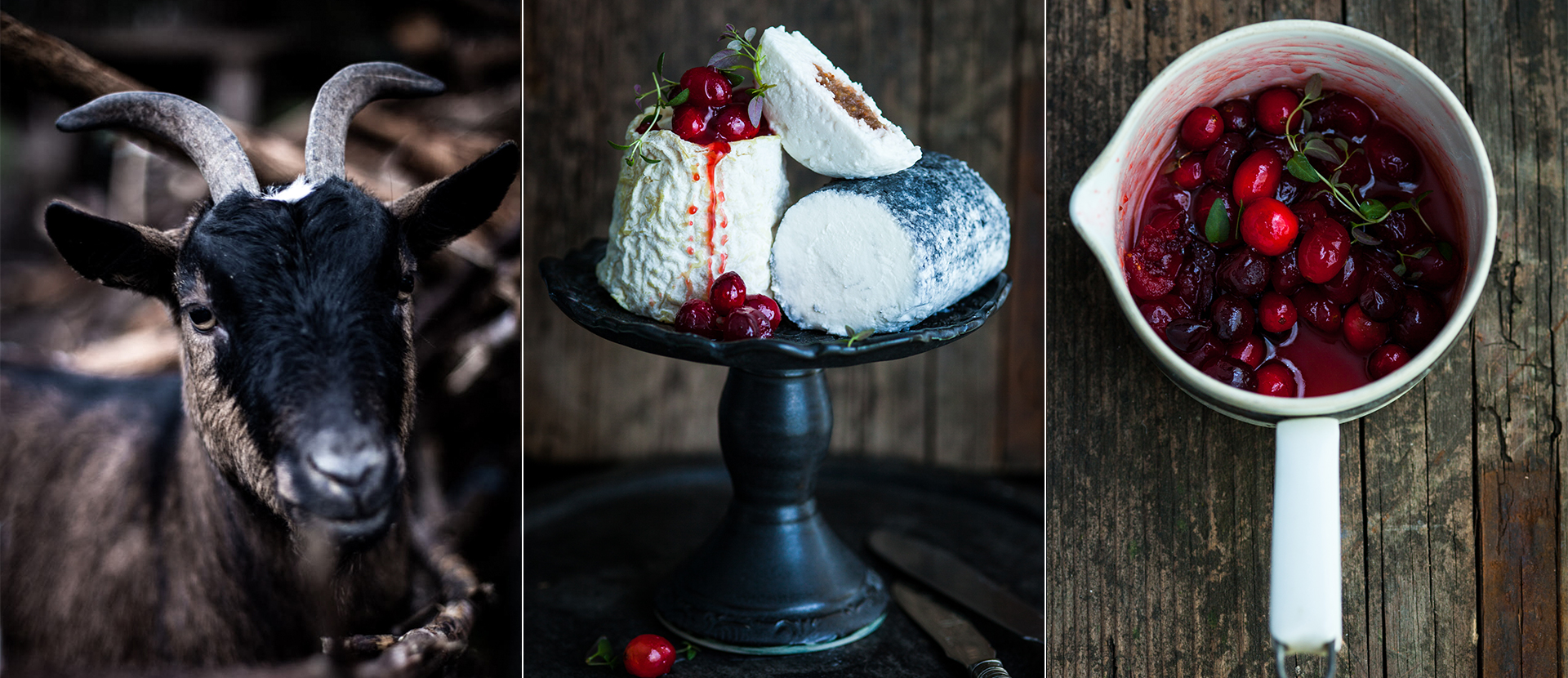 verschiedene Ziegenkaese mit eingekochten Cranberries und frischen Thymian Foodstyling Foodfotografie Katrin Winner Muenchen